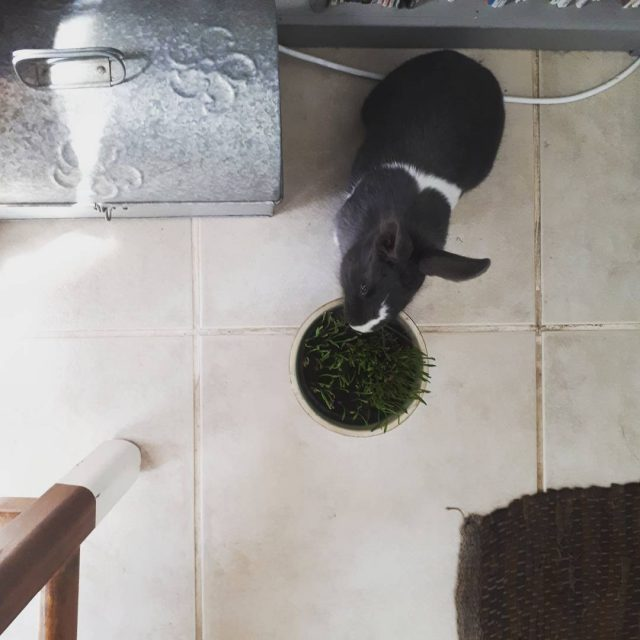 Snacking while mommy is working saltedlife bunnylove